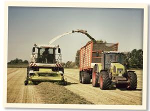 Landwirtschaft im Mai bis Juni